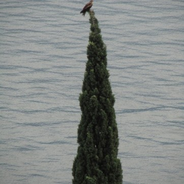 art bettina ghasempoor (160) Gardasee