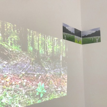 Gedenkminuten. Vögelgezwitscher. Wald ist entstanden anstelle des Dorfes Beaumont-en-Verdunois. Fototriptychon: Der Junge im Gräberfeld (Gefallene Amerikaner in Luxemburg)