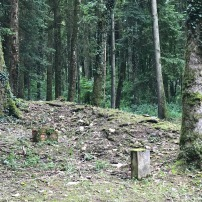 In VERDUN gibt es neun Dörfer, die nicht mehr existieren nach den Schlachten des 1. Weltkrieges. Wald ist entstanden ... eine intensive Natur, Vögelgezwitscher, auf den Ruinen und einer Vergangenheit.